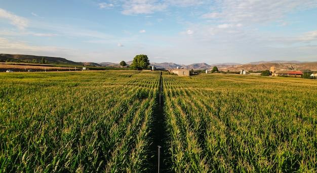 トウモロコシ畑の航空写真