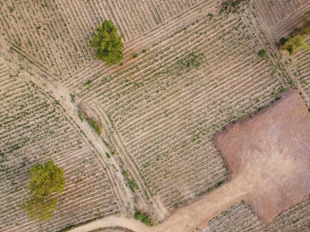 耕作期の農地の航空写真