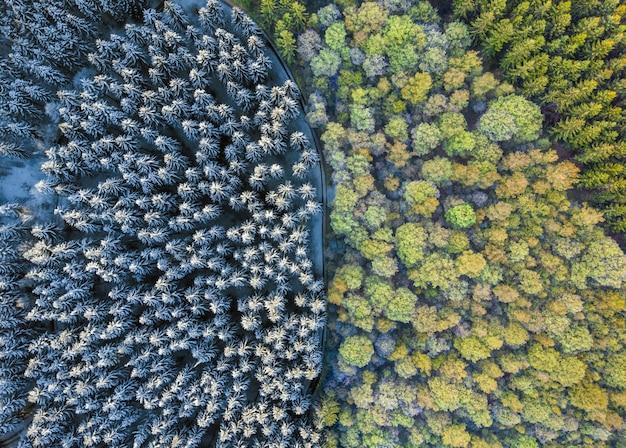 화려한 숲과 숲의 항공 사진은 햇빛 아래 눈에 덮여