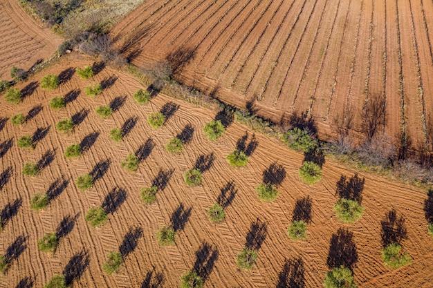 耕された土地、オリーブ畑の空中写真