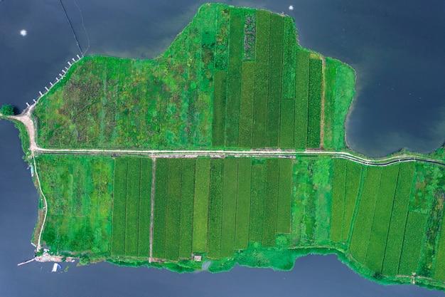田んぼの航空写真