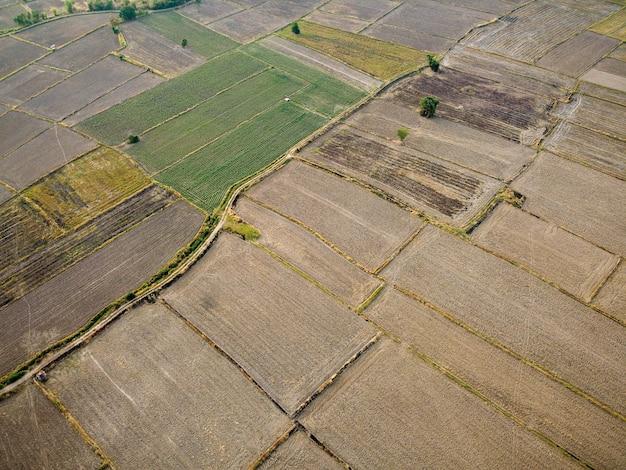 Аэрофотоснимок большого сельскохозяйственного участка подготовка к выращиванию риса, drone фотография