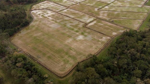Воздушное рисовое поле. красивый пейзаж. город на фоне