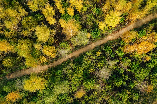 Aerial shot of beautiful autumn forest