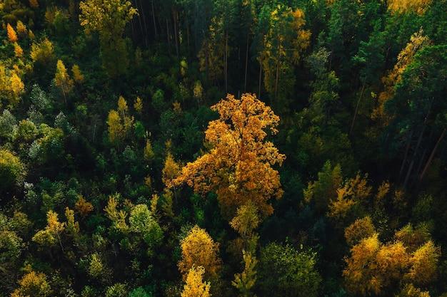 Ripresa aerea della bellissima foresta autunnale