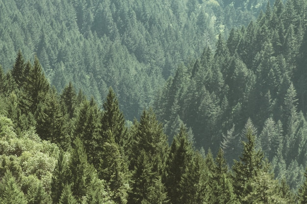 Aerial shot of a beautiful forest with pine trees