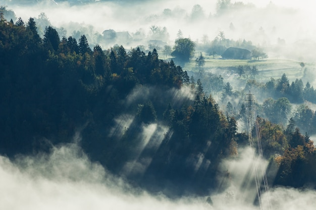 Aerial shot of a beautiful tree forest covered with fog in bled, slovenia