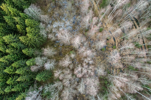 Aerial shot of birch and spruce trees