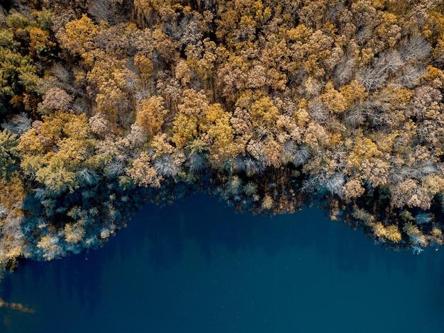 Colpo aereo degli alberi coperti di foglie marroni vicino ad un'acqua