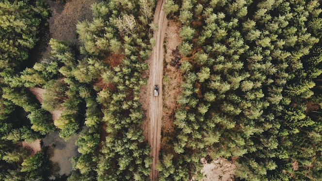 Aerial shot of a car driving on a pathway in the middle of a green forest
