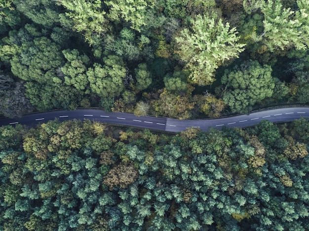 Aerial shot of a curvy thin road going through a thick forest