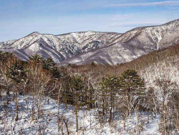 Ripresa aerea del fianco della montagna shiga kogen danneggiato nella prefettura di nagano, giappone