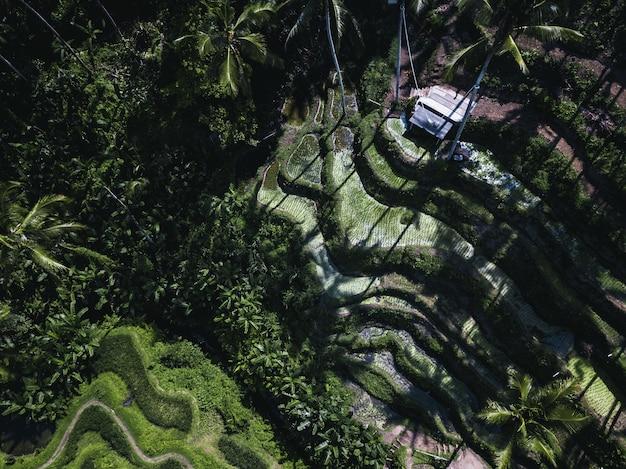 Ripresa aerea di un campo coperto di palme e cespugli sotto la luce del sole
