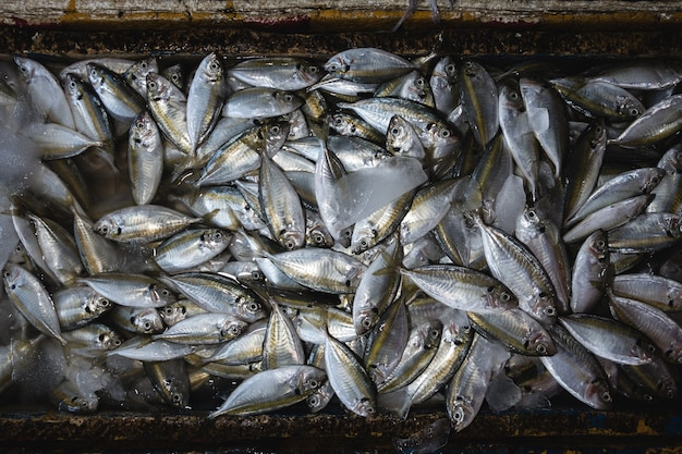Aerial shot of fish on an early morning fish market