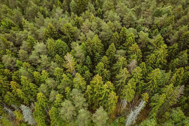 Ripresa aerea di una foresta con molti alti alberi verdi