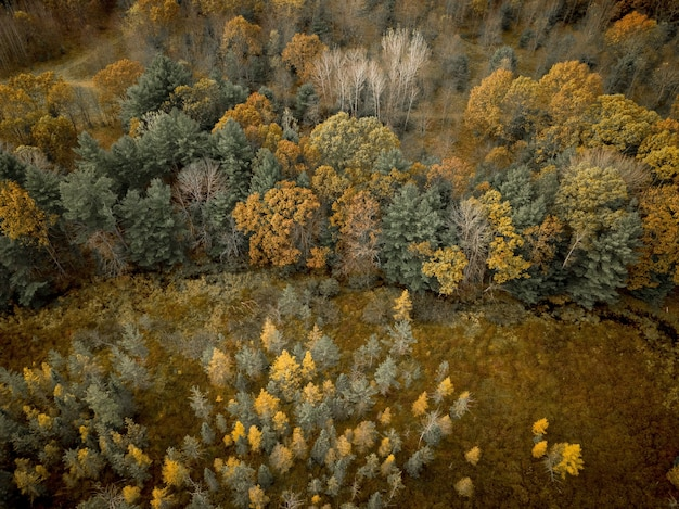 Aerial shot of a grassy field near a forest with yellow and green leafed trees