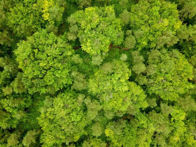 Ripresa aerea degli alberi verdi di una foresta nel dorset, regno unito, scattata da un drone
