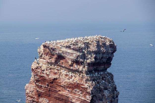 Ripresa aerea di un'enorme isola rocciosa con molti uccelli bianchi su un paesaggio marino