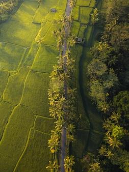 Ripresa aerea di una lunga strada circondata da alberi e campi