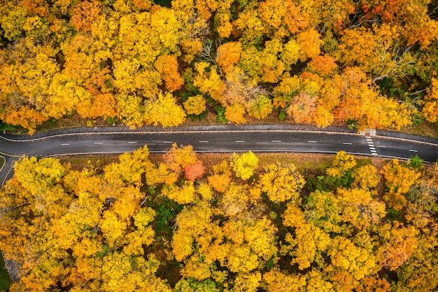 Aerial shot of a long trail leading through yellow autumn trees