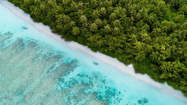 Aerial shot of maldives showing the amazing beach the clear blue sea and the jungles
