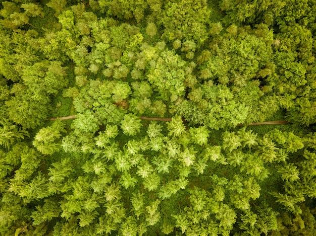 ハーディーズモニュメント、ドーセット、英国の近くの木がたくさんある美しい森の空中ショット