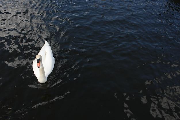 穏やかな湖で静かに泳ぐ美しい白鳥の空中ショット