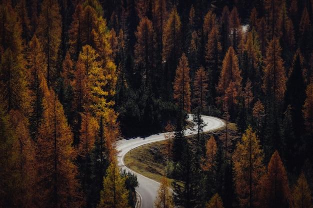 黄色と緑の木々の真ん中に曲がりくねった道の空中ショット