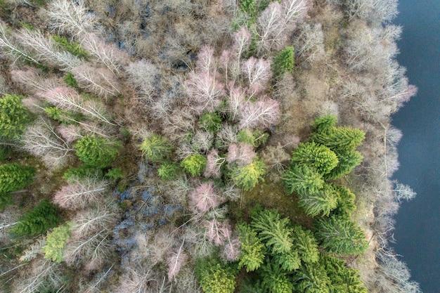 日光の下で裸の木と松に覆われた森の空中ショット