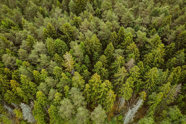 키가 큰 푸른 나무가 많은 숲의 공중 촬영