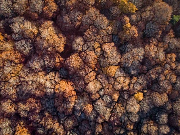 낮에 갈색 잎이 많은 나무와 숲의 공중 총, 배경 또는 블로그에 적합