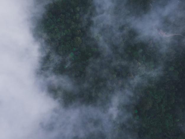 안개로 뒤덮인 푸른 숲의 공중 촬영