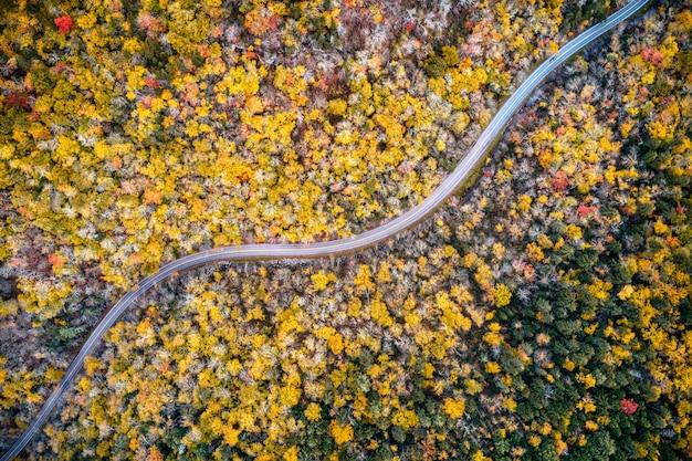 黄色い秋の木々の間を続く長い道の空中ショット