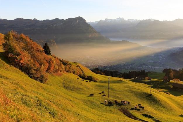 산 경사면에 소와 산 풍경의 공중 탄