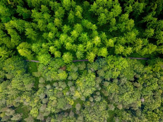 日中の森の真ん中にある道路の空中ショット