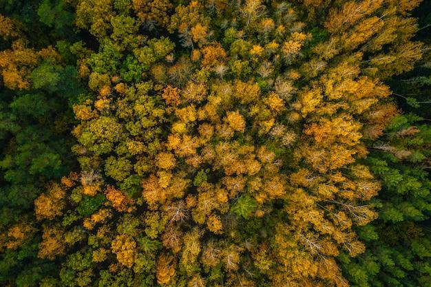 아름다운 가을 숲의 공중 촬영