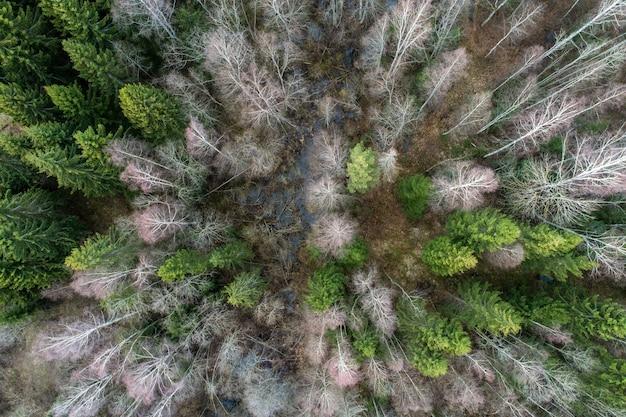 白樺とトウヒの木の空中ショット