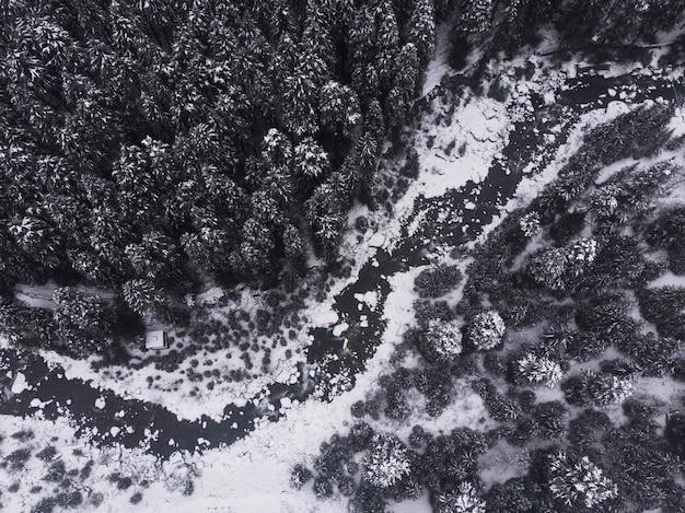 Аэрофотоснимок красивых заснеженных сосен в лесу