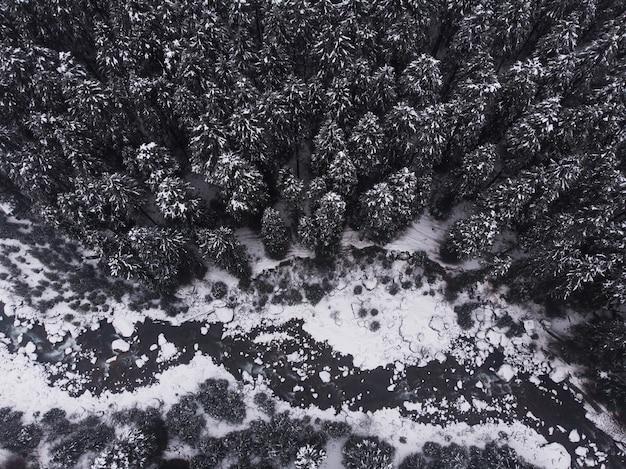 森の中の美しい雪をかぶった松の木の空中ショット