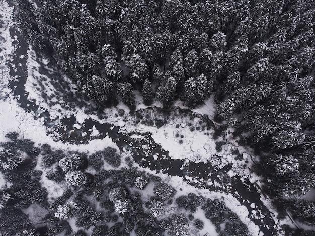 森の中の雪をかぶった美しい松の木の空中ショット