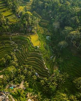 緑と木々に囲まれた田んぼの空中ショット