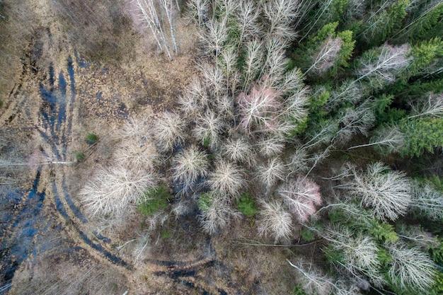 숲에서 나무와 초의 공중 촬영
