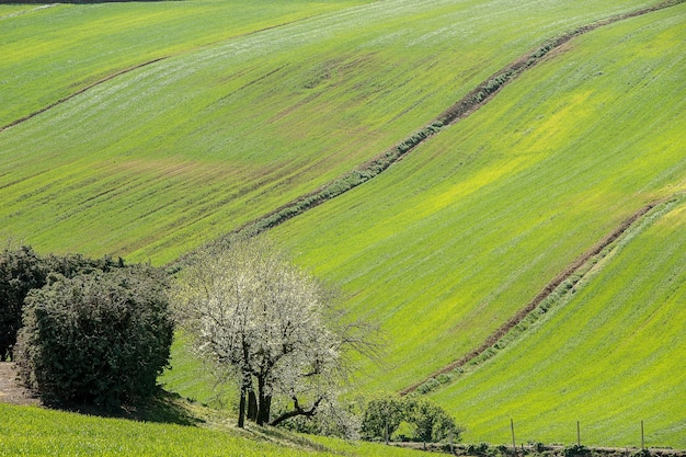 Воздушный снимок деревьев на красивом, покрытом травой поле под солнечным светом