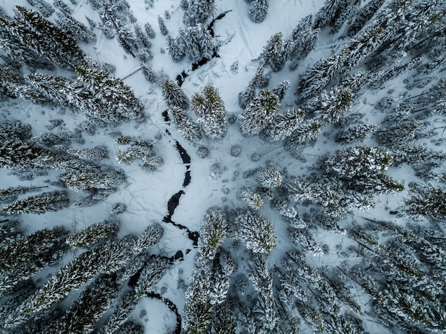 Aerial shot of pine trees covered in snow