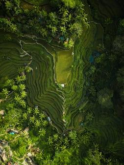Ripresa aerea delle colline di riso circondate da verdi e alberi