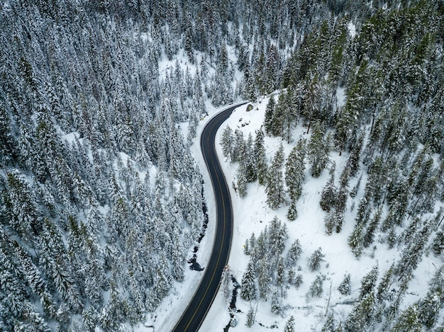 Aerial shot of a road near pine trees covered in snow