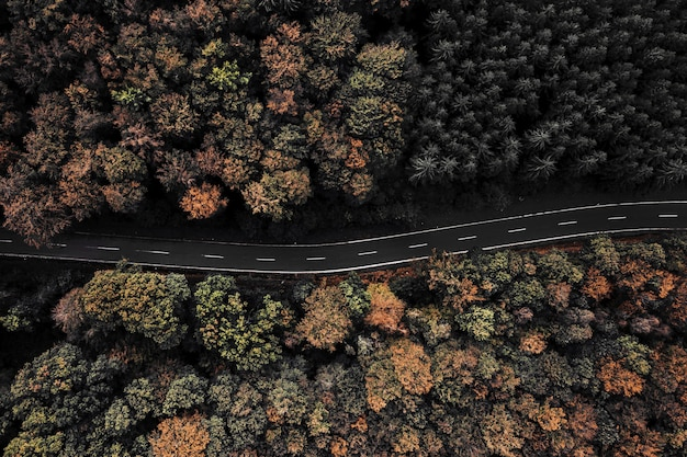 Aerial shot of a road surrounded by trees in a forest