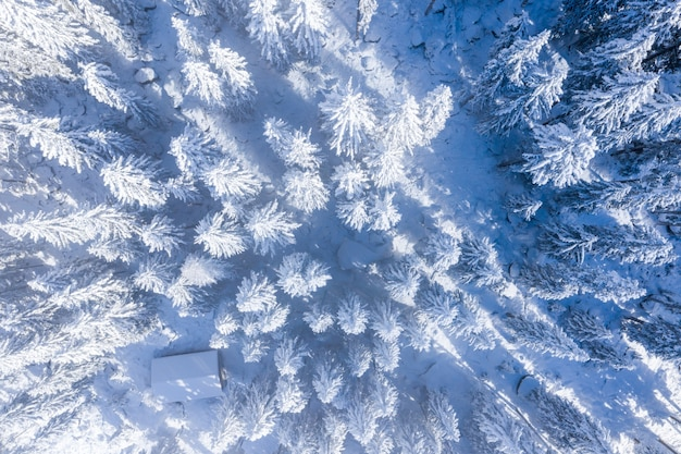 Ripresa aerea di alberi coperti di neve durante una giornata di sole