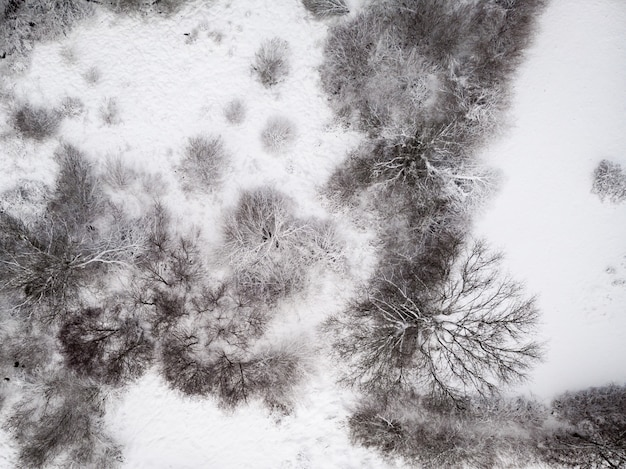 Aerial shot of a snowy ground with leafless trees