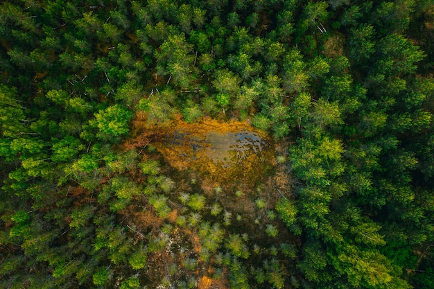 Ripresa aerea di una superficie d'acqua nel mezzo di una foresta circondata da alti alberi verdi